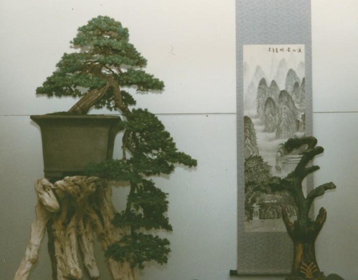 Juniperus rig cascade_home.jpg