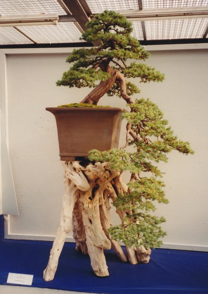 Juniperus rig cascade.jpg