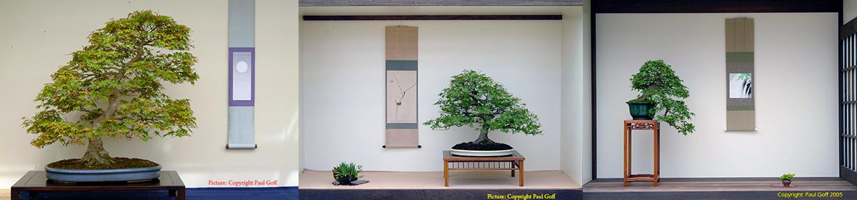 Bonsai Center Ginkgo