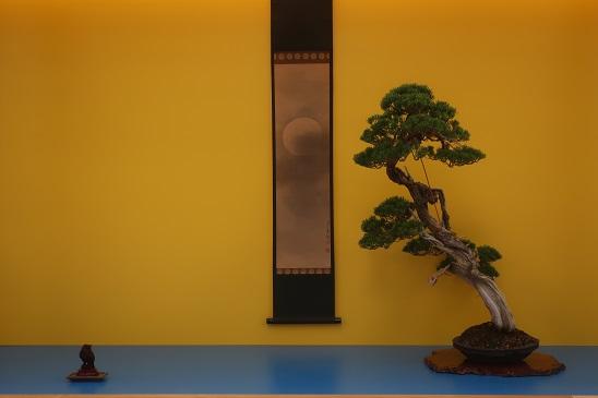 Bonsai Center Ginkgo Pagina 3 Bonsai Verkoop Teelt En Workshops